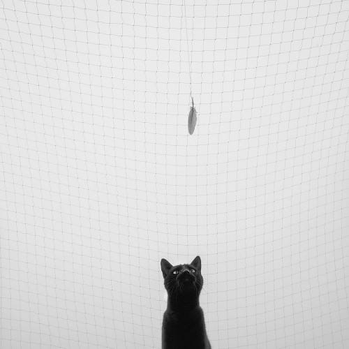 <Harmony> <Marcin Ryczek> <Cat> <Cat Photograph> <Darklight Art>